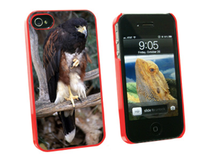 Harris Hawk Raptor - Snap On Hard Protective Case for Apple iPhone 4 4S - Red