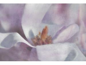 Magnolia Melody I Poster Print by Irene Weisz (24 x 36)