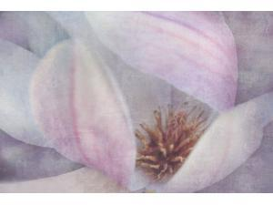 Magnolia Melody II Poster Print by Irene Weisz (24 x 36)