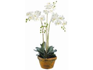 36 in. White Phalaenopsis Orchid in Terra Cotta Container