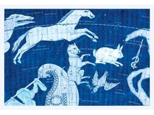 Buyenlarge - 16707-6CG28 - Canus Major #2 28x42 Giclee on Canvas