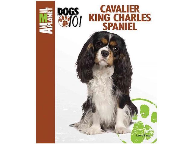 title cavalier king charles spaniel