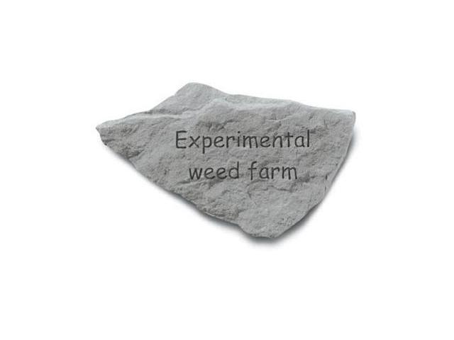 Kay Berry- Inc. 91120 Experimental Weed Farm - Garden Accent - 10 Inches x 6 Inches