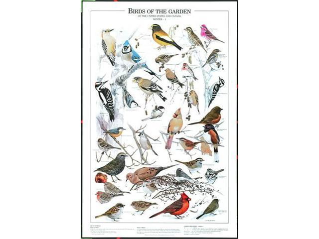 Windsor Nature Posters Birds of the Garden - Winter Vol. I