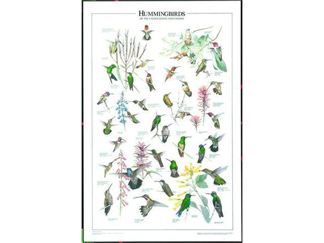 Windsor Nature Posters Hummingbirds of the U.S. and Canada