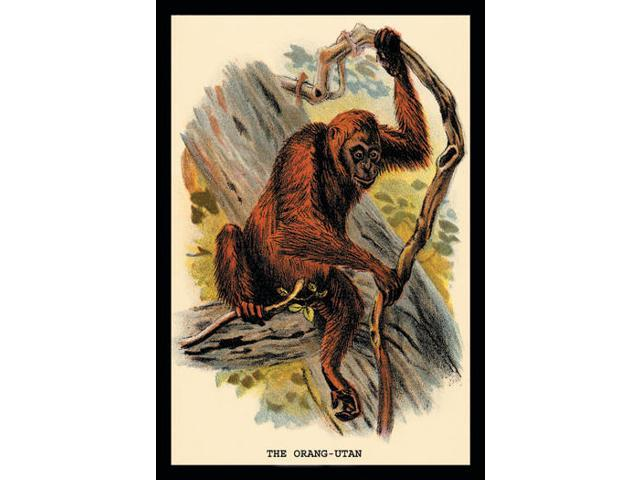 Buyenlarge 15172-2P2030 The Orang-utan 20x30 poster