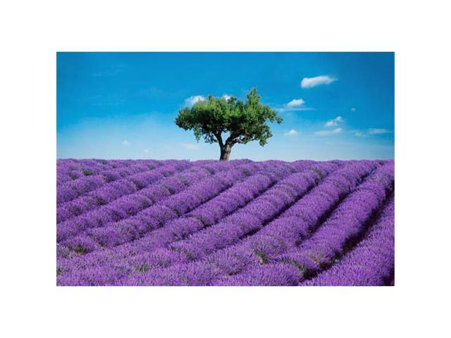Brewster Home Fashions DM144 Provence Wall Mural - 100 in.