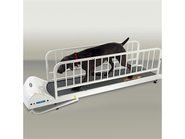 GoPet Petrun Pr725 Foldable Dog Treadmill Indoor Exercise / Fitness Kit - For Dogs Upto 44 Pounds