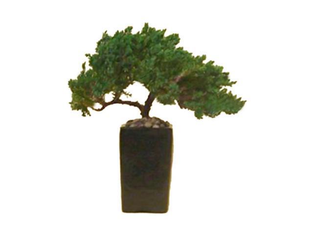 Juniper Bonsai Tree 8 Preserved Bonsai Tree (Preserved - Not a living tree)