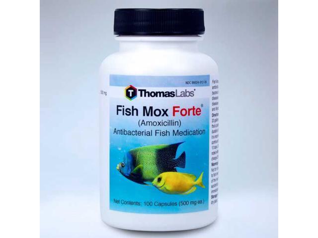 Fish mox forte 500mg amoxicillin 100ct for Fish mox forte