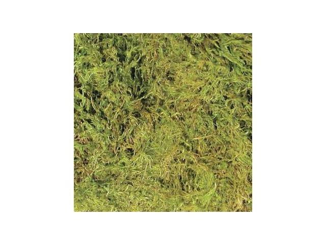 Green Terrarium Moss - Xl (30 To 40Gal)