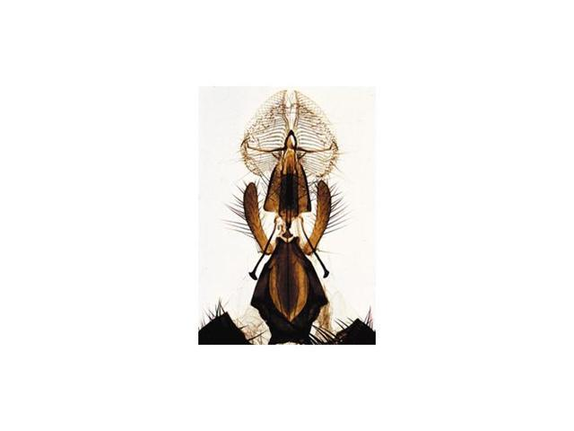 Insect (Insecta) - English 40 Slides with Text
