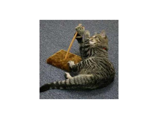 Ourpet S Company Cat Play-N-Squeak Spring Fling