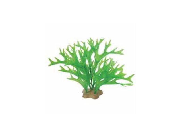 Natural Elements Antler Fern Green 5-6 Inch