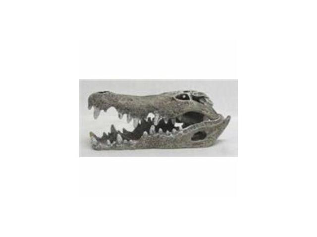 Nile Crocodile Skull Small
