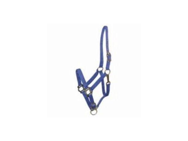 Gatsby Leather Nylon Cob Horse Halter Blue
