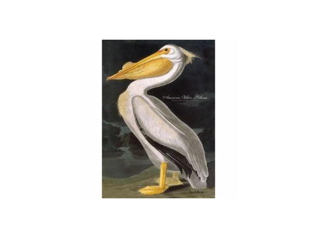 White Pelican Flag 18 X 12.5 Inch