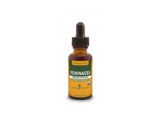 Echinacea Glycerite - Herb Pharm - 1 oz - Liquid