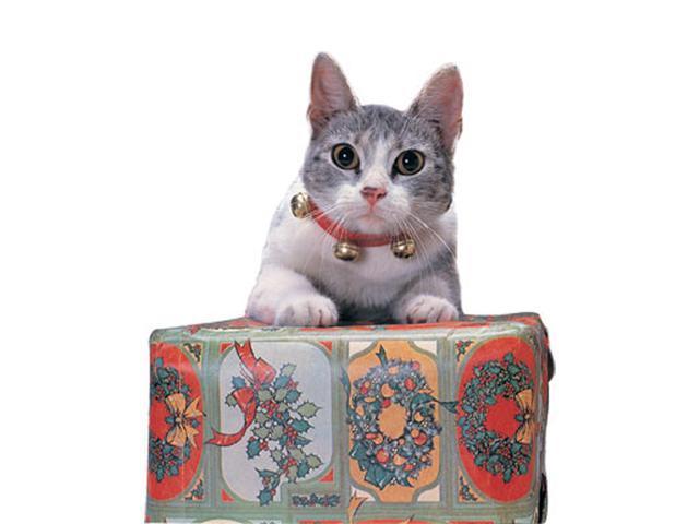 Jingle Cat Collar