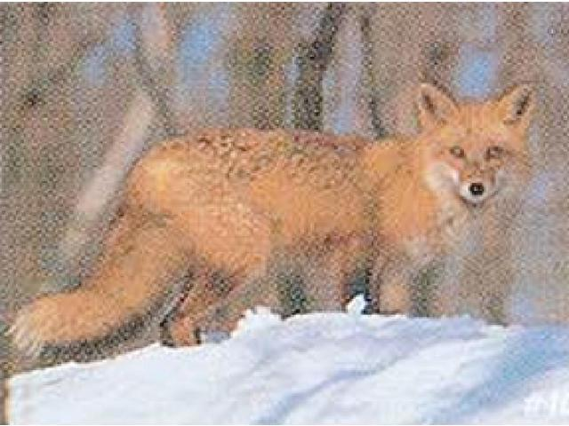 Delta Sports Products #107 Red Fox Target