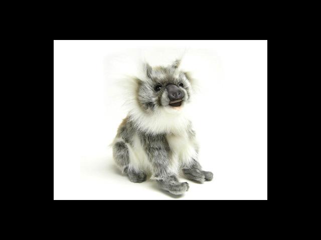 Baby Koala 9.06