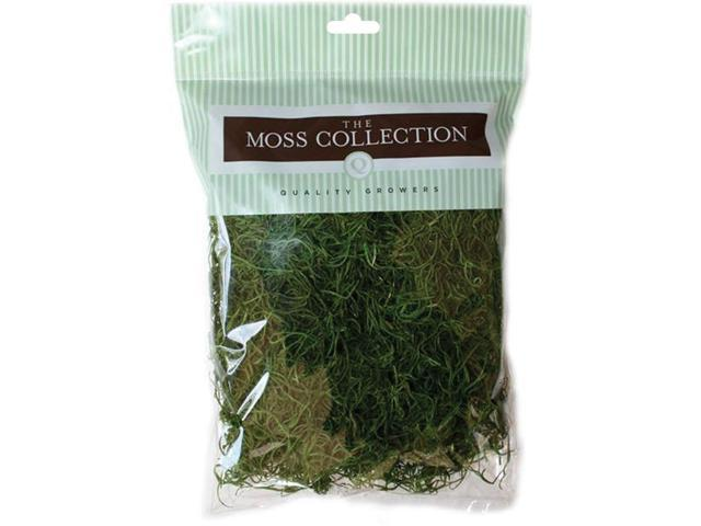 Preserved Spanish Moss 108.5 Cubic Inches-Apple Green