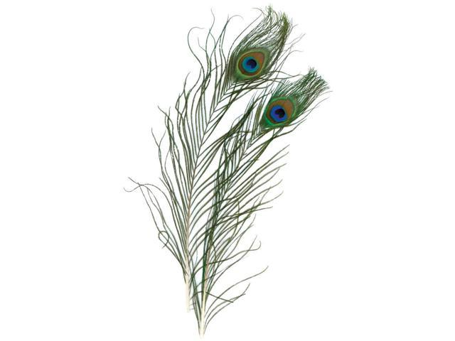 Peacock Eye Feathers 2/Pkg -Natural