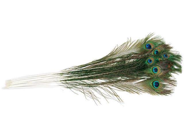 Peacock Eye Feathers 12/Pkg-Natural