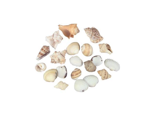 Sea Shells In Net 8oz-Natural
