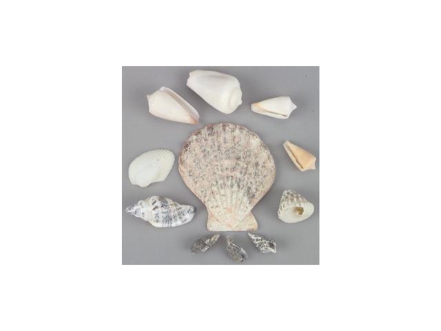 Sea Shells In Pectin Shell 3.2oz-Natural