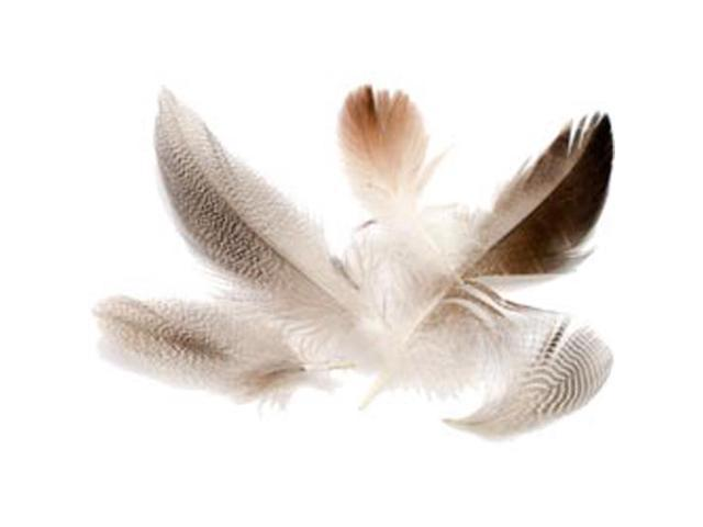 Domestic Goose Feathers 6 Grams/Pkg-Natural