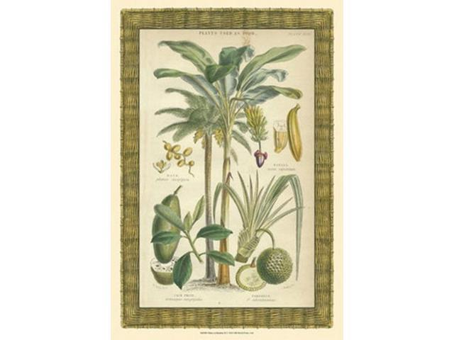 Palms in Bamboo II Poster Print (13 x 19)