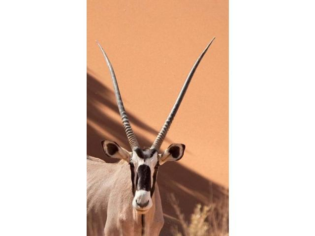 Close-up of Oryx, Namib-Naukluft Park, Namibia, Africa Poster Print by Jaynes Gallery (22 x 36)