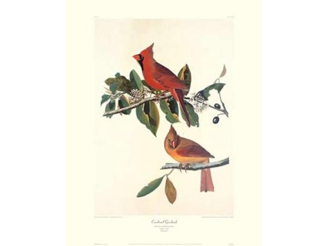 Cardinal Grosbeak (decorative border) Poster Print by  John James Audubon  (8 x 10)