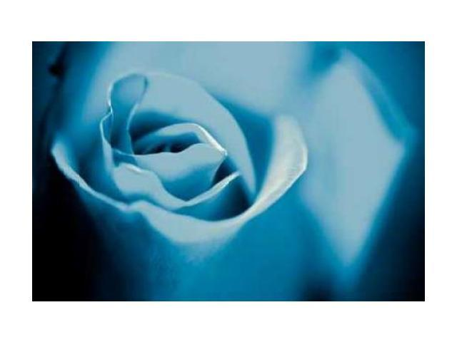 Blue Rose II Poster Print by Beth Wold (20 x 28)