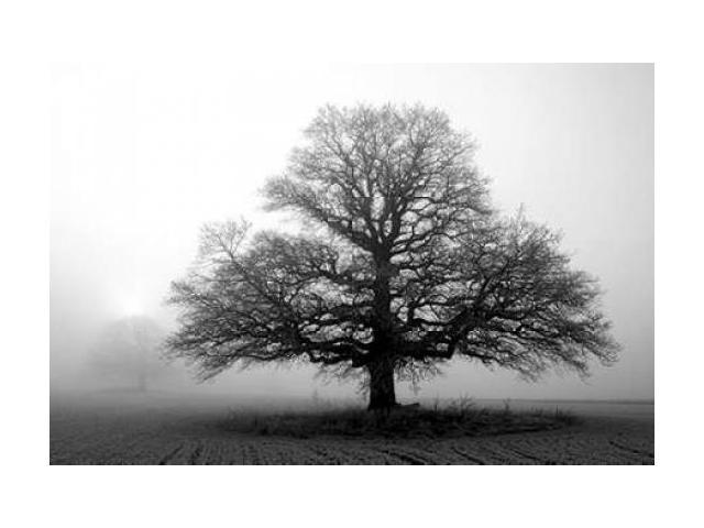 Tree in Mist 2 Poster Print by  PhotoINC Studio (24 x 36)