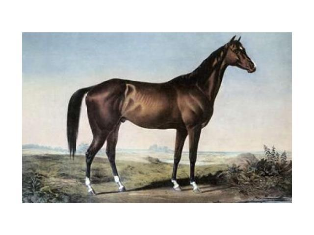 Celebrated Horse Lexington Poster Print by  Currier and Ives (24 x 36)
