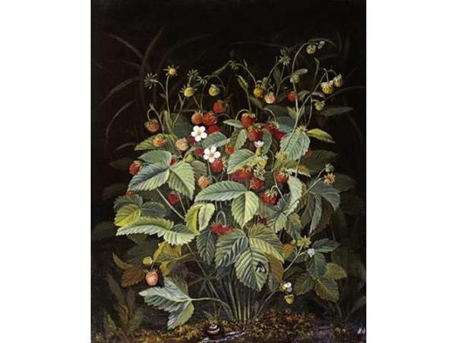 Wild Strawberries Poster Print by Otto Diderich Ottesen (24 x 30)