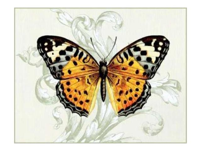 Butterfly Theme IV Poster Print by Susan Davies (22 x 28)