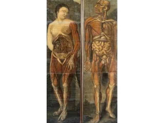 Anatomical Drawings of Male and Female Figures Poster Print by  Jacques Fabian Gautier Dagoty  (12 x 18)