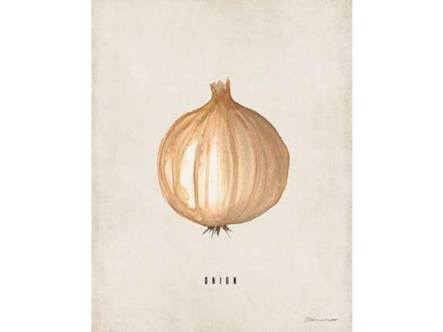 Onion Poster Print by Stephanie Marrott (22 x 28)