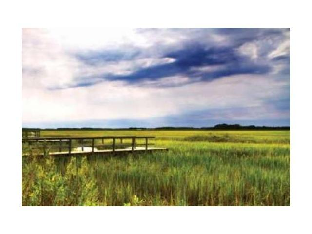 Marshland Storm I Poster Print by Alan Hausenflock (20 x 28)