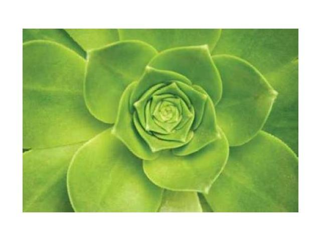 Succulent II Poster Print by Karyn Millet (24 x 36)