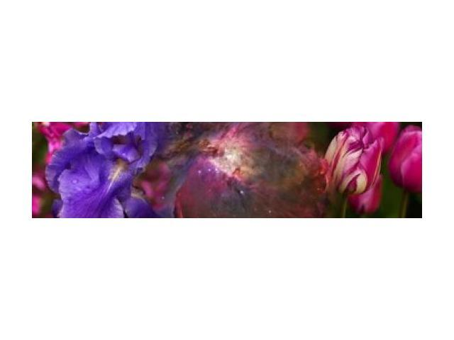 Close-up of Hubble galaxy with iris and tulip flowers Poster Print (20 x 5)