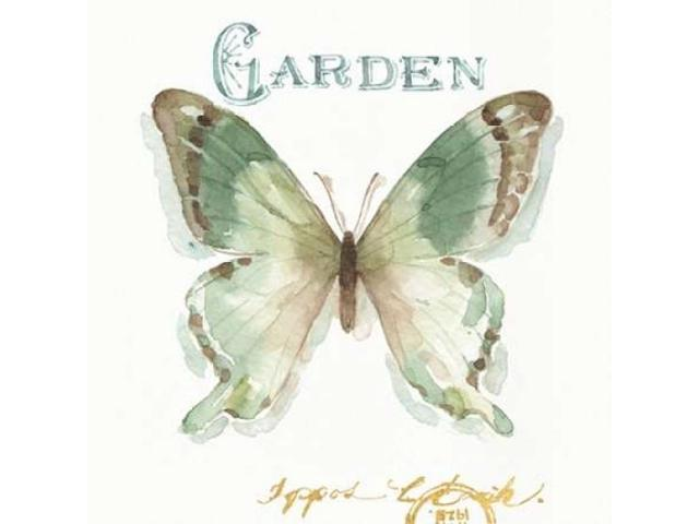 My Greenhouse Butterflies III Poster Print by Audit Lisa (24 x 24)