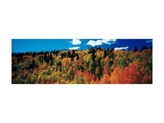 Fall Durango, Colorado Poster Print by Panoramic Images (38 x 12)