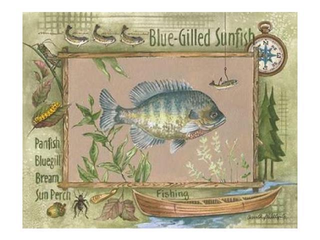 Blue-Gilled Sunfish Poster Print by Anita Phillips (11 x 14)