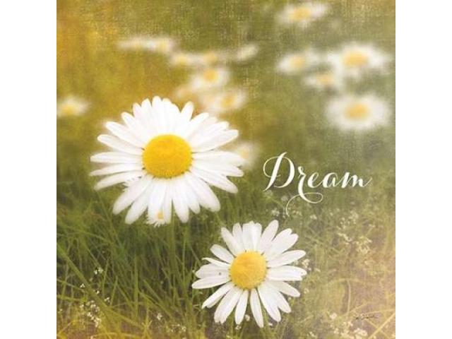 Daisy Dreams Poster Print by Sue Schlabach (12 x 12)