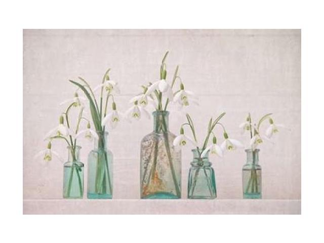 Snowdrops Bottles Poster Print by Cora Niele (24 x 36)