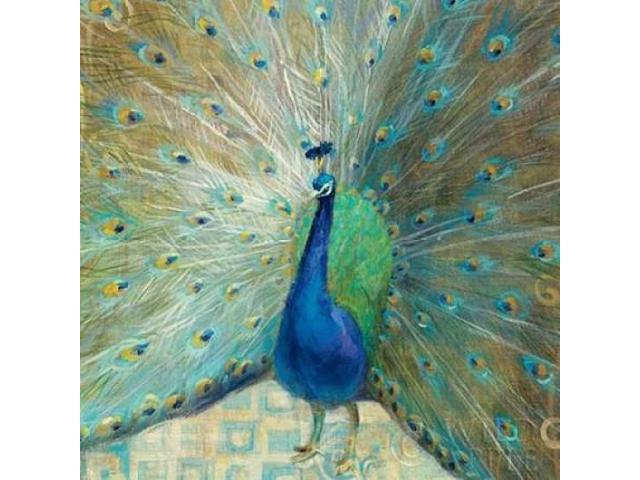 Blue Peacock on Gold Poster Print by Danhui Nai (12 x 12)